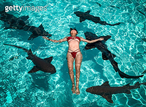 Swimming with sharks - gettyimageskorea