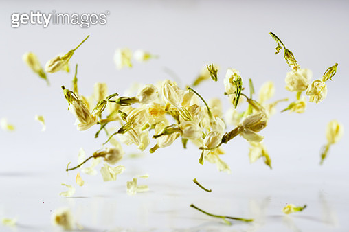 "The jasmine flower dancing in slow motion with white background""n - gettyimageskorea"