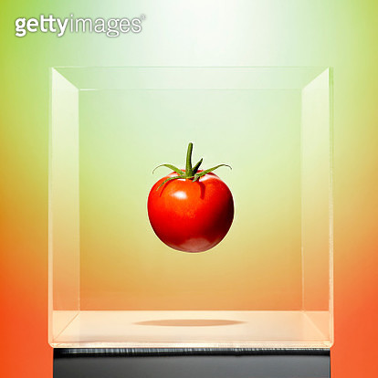 A tomato in a transparent box on a multi colored studio background - gettyimageskorea
