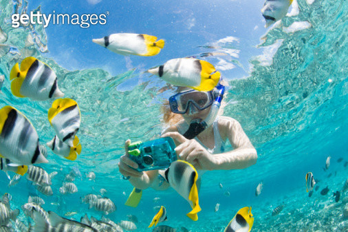 French Polynesia, Bora Bora, Woman taking underwater pictures of colorful reef fish - gettyimageskorea